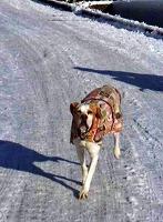 雪の中を走るもんちゃん