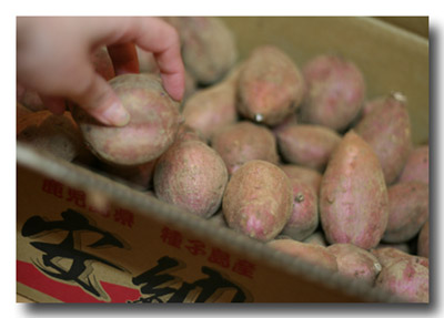 安納紅 小芋 5kg