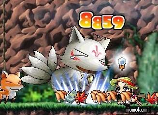 Maple0001_20080912083526.jpg