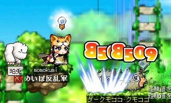 Maple0002_20080919075821.jpg