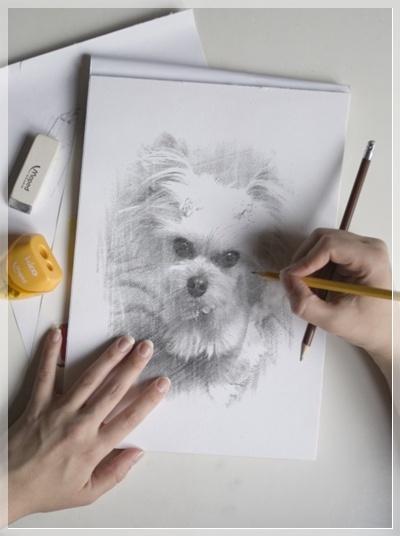 もも鉛筆画