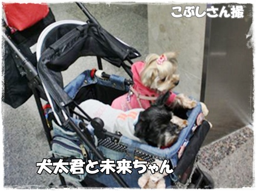 犬太君と未来ちゃん