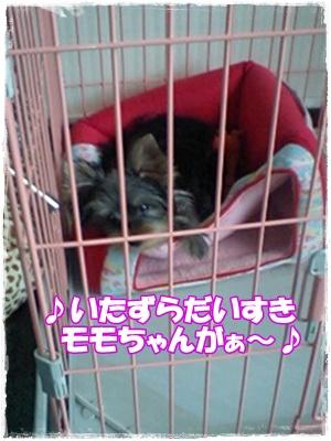 GRP_0385.jpg