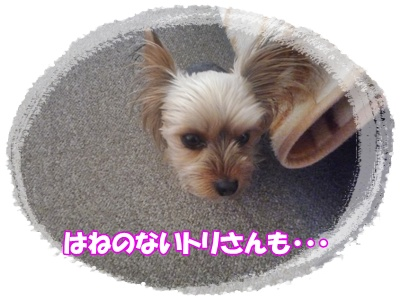 P1090769.jpg