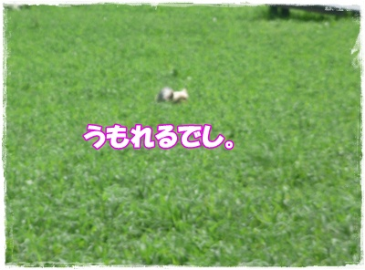P1120599.jpg