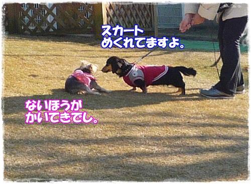 P1170093.jpg