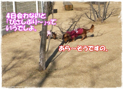P1170987.jpg