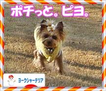 P1180038.jpg