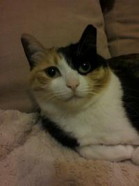 チェリーの愛猫ふたり目コロン