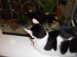 熱帯魚を見るピノ