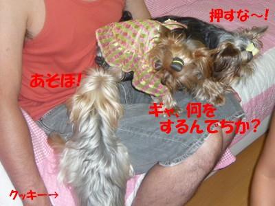 P1050769 ⑤