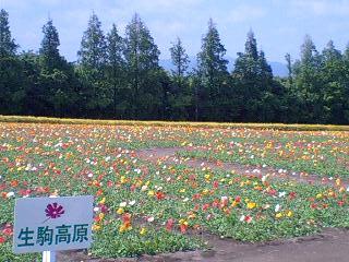 5月6日 生駒高原10