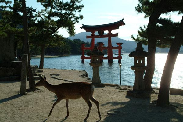 厳島神社2鹿