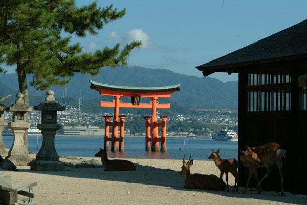 厳島神社参拝16鹿と