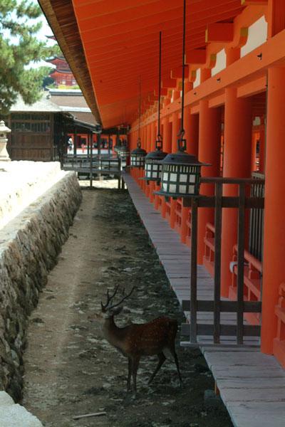 厳島神社参拝21