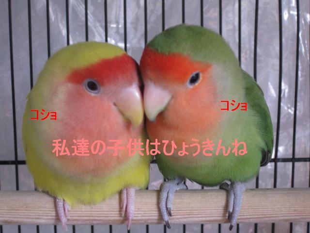 IMG_730011.jpg