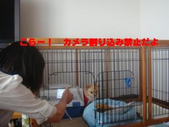 蜑イ繧願セシ縺ソ_convert_20090711224205