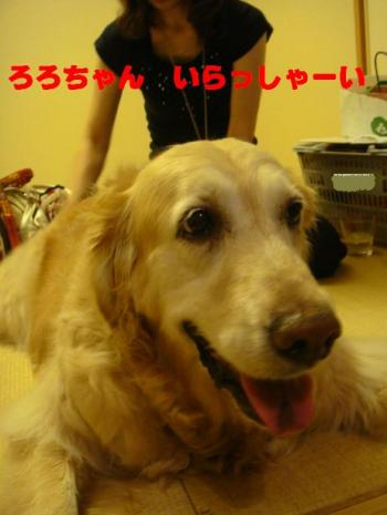 繧阪m縺。繧・s繧「繝・・_convert_20090722094408