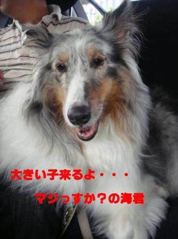 豬キ蜷幄サ奇シ胆convert_20090727170237