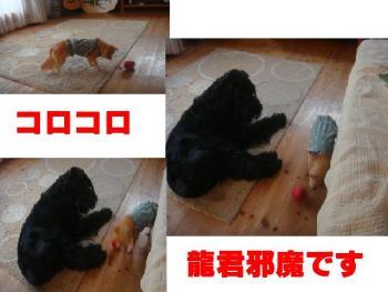 繧ウ繝ュ繧ウ繝ュ_convert_20090817193642