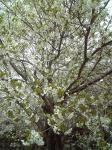 エアロビセンター桜