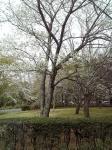 エアロビセンター桜 (1)