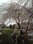 エアロビセンター桜 (2)