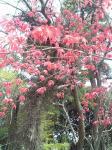エアロビセンター桜 (3)