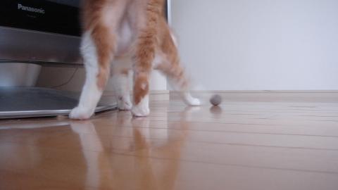 猫毛ボールで4