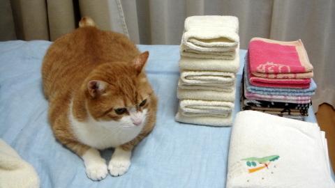 洗濯物が好き8