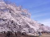 小金井公園p