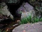 貫井神社、湧水