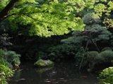 殿ヶ谷戸庭園 湯水