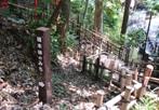 雑木林の道 5