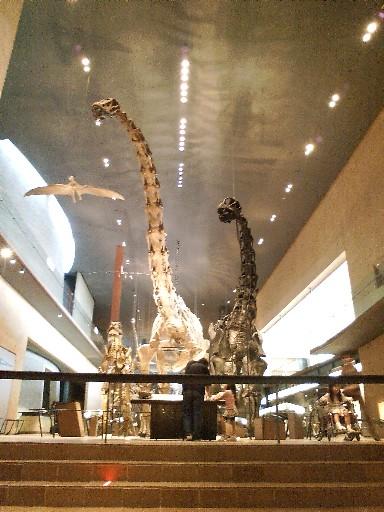 いのちのたび博物館・・・①