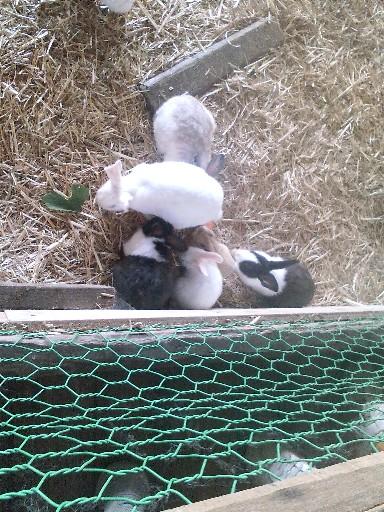 えさを食べるウサギ