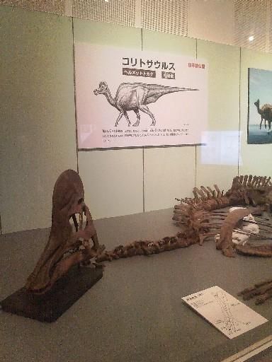 コリトサウルス