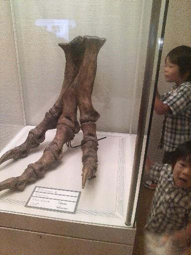 ティラノサウルスの足