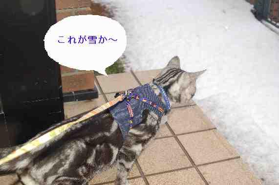 雪を覗き込むちょび