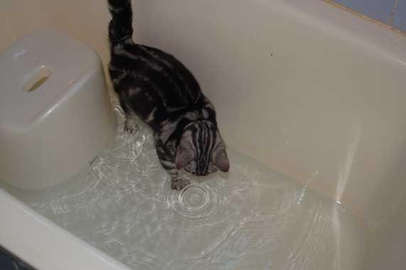 水なんか怖くないにゃ