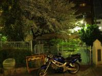 SVさんと夜桜