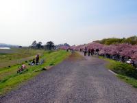 お花見狛江側_01