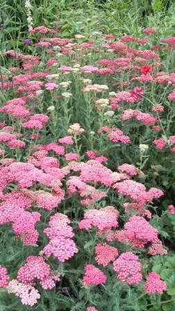 風のガーデン花