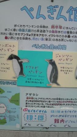 ペンギン説明