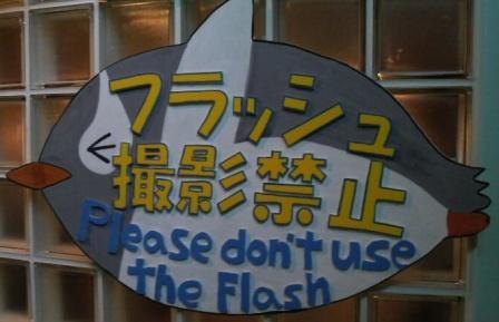 フラッシュはやめてね