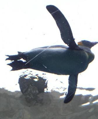空飛ぶペンギンくん