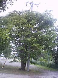 20060724170204.jpg