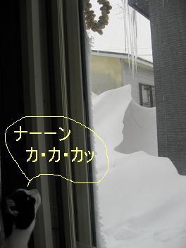 IMG_1167.jpg