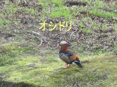 IMG_7916.jpg
