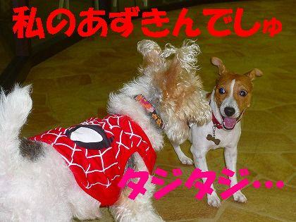 蜘蛛は苦手かい?